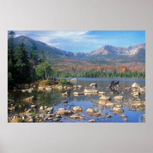 Sandy Stream Pond and Moose Print