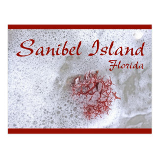 Sanibel Island Red Seaweed Postcard