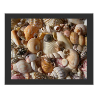 Sanibel Seashell Collection Poster