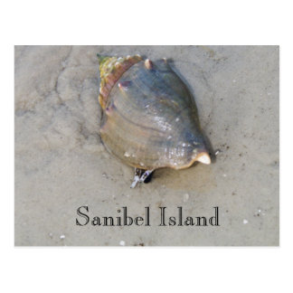 Sanibel Shell Postcard