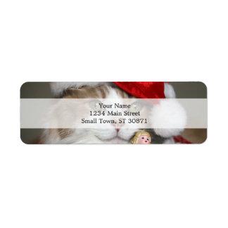 Santa cat - christmas cat - cute kittens