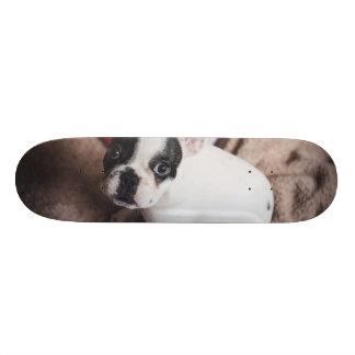 Santa claus dog -funny pug - dog claus skate deck