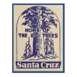Santa Cruz California - Home of the Big Trees Postcard