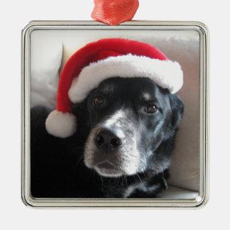 Santa Dog-Labrador Rottweiler Mix Silver-Colored Square Ornament