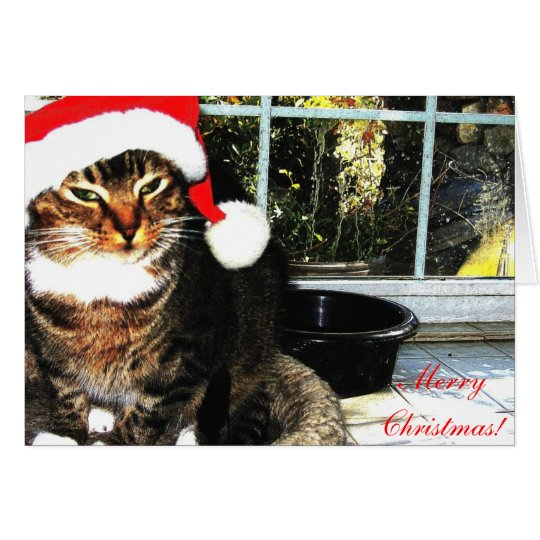 Santa hat cat II Card