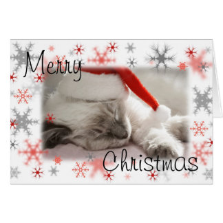 Santa kitty xmas card