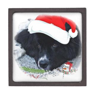 Santa Paw's Newfoundland Holiday gifts Premium Gift Boxes