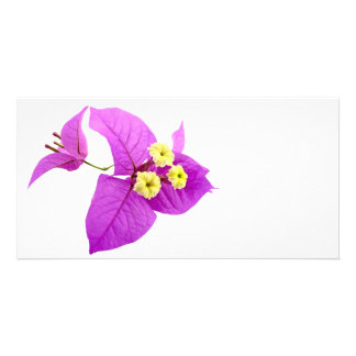 Santa Rita Flowers Photo Cards