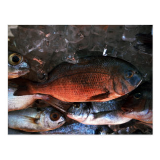 Santorini fresh fish Greece Postcard