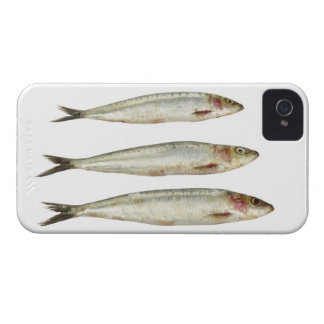 Sardines (Pilchards) 2 iPhone 4 Case-Mate Case