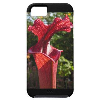 Sarracenia moorei photo iPhone Case
