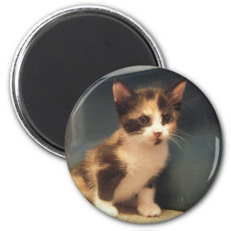 Sassy Calico Kitty Magnet
