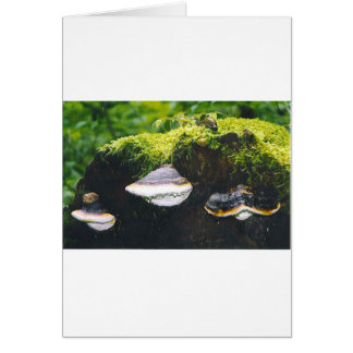 Saturn Mushrooms Card