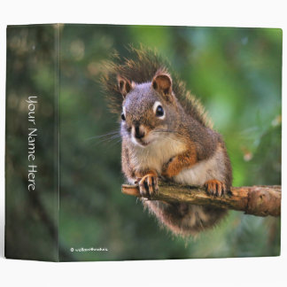 Saucy Red Squirrel in the Fir 3 Ring Binders