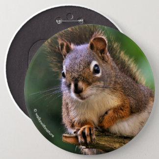 Saucy Red Squirrel in the Fir 6 Inch Round Button