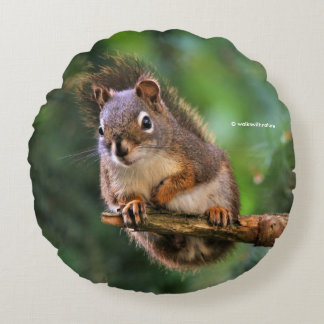 Saucy Red Squirrel in the Fir Round Pillow