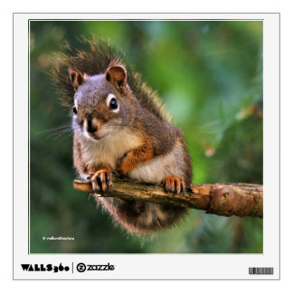 Saucy Red Squirrel in the Fir Wall Decal