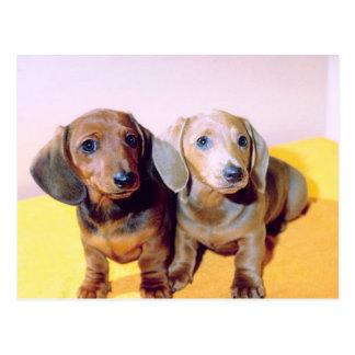 Sausage Dogs Postcard