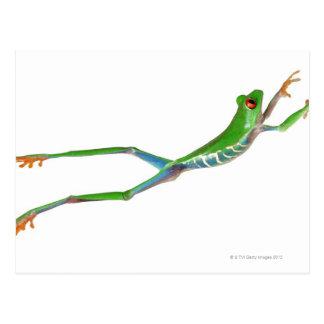 Sauter observé par rouge de grenouille d arbre cartes postales