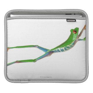 Sauter observé par rouge de grenouille d arbre poches pour iPad
