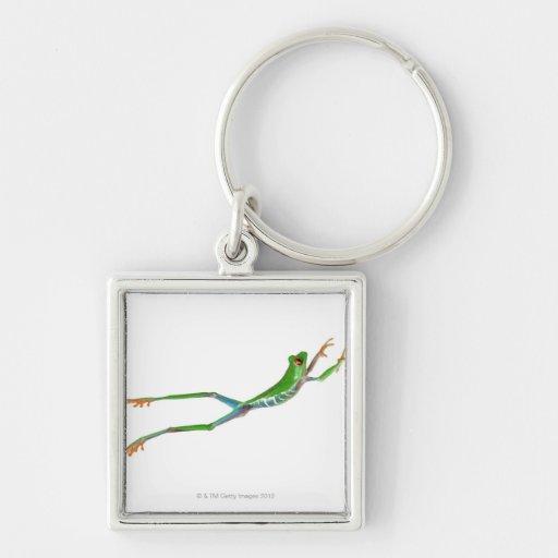 Sauter observé par rouge de grenouille d'arbre porte-clés