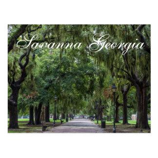 Savanna Georgia Tree Park Postcard