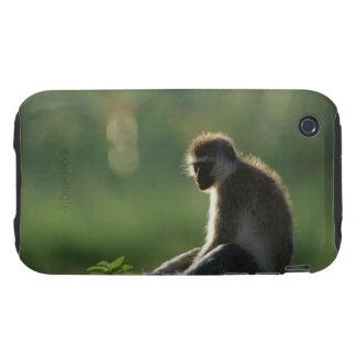 Savanna Monkey iPhone 3 Tough Covers