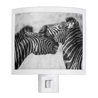 Savanna zebras night lights