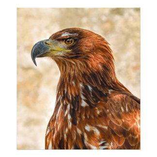Savannah eagle photo print