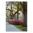Savannah Georgia in Spring Forsyth Park Azaleas Oa Card
