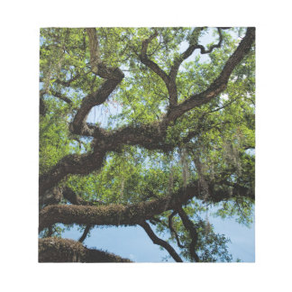 Savannah Live Oak And Spanish Moss Notepads