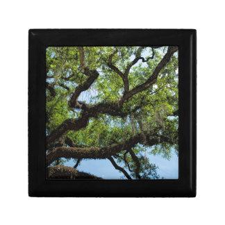 Savannah Live Oak And Spanish Moss Trinket Boxes