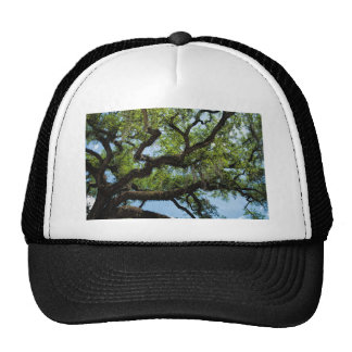 Savannah Live Oak And Spanish Moss Trucker Hat