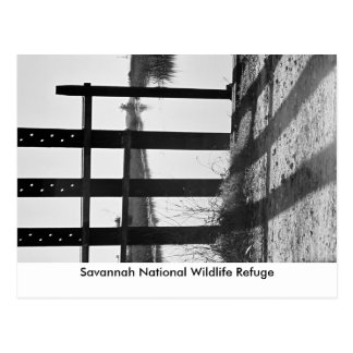 Savannah National Wildlife R... Postcard