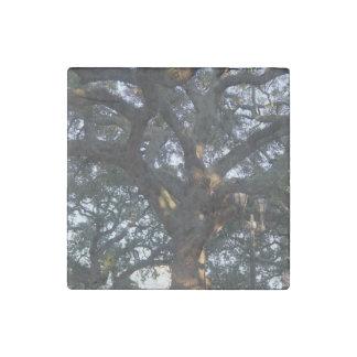 Savannah Oak Stone Magnets