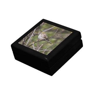 Savannah Sparrow Gift Box
