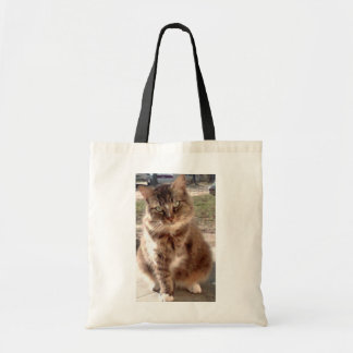 Save a cat, Save the planet