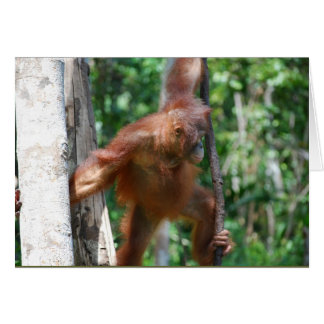 Save Great Apes wildlife Card