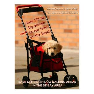 Save Off-Leash Dog Walking Congresswoman Pelosi! Postcard