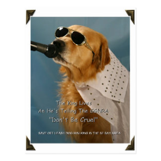 Save Off-Leash Dog Walking Senator Boxer Postcard