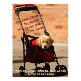 Save Off-Leash Dog Walking Senator Feinstein! Postcard