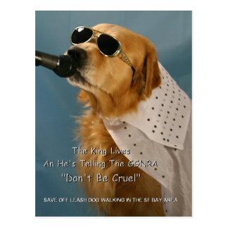 Save Off-Leash Dog Walking Senator Feinstein Postcard
