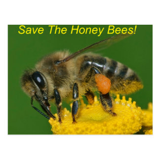 Save the Bees Green Postcard