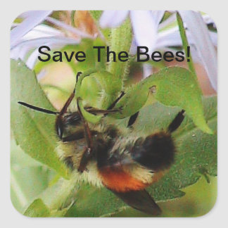 Save The Bees Macro Photo Sticker