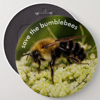 Save the Bumblebees Pollinating Flowering Carrot 6 Inch Round Button