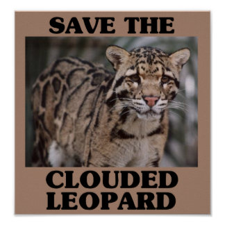 Save the Clouded Leopard Poster