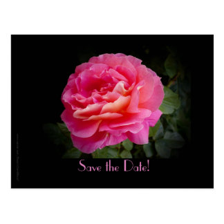 Save the Date 70th Anniversary Party Pink Rose Postcard