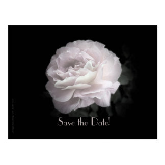 Save the Date 75th Birthday Pale Pink Rose Postcard
