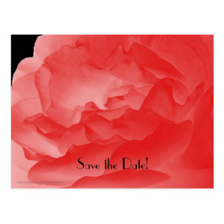Save the Date 90th Birthday Party, Coral Rose Postcard