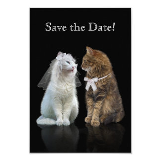 Online dating site for cat lovers